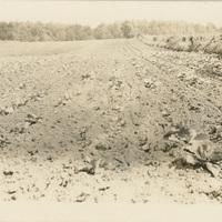 farm_4031copy.JPG